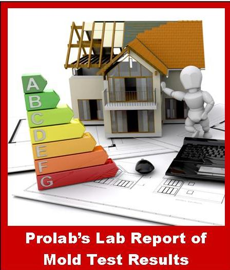 Prolab's Mold Test Results